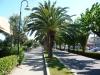 alba adriatica7