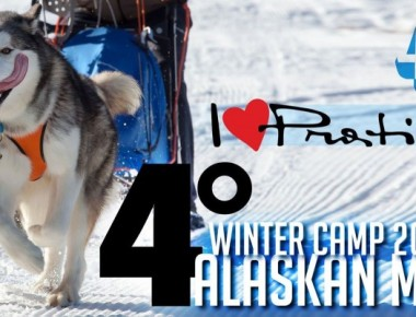 ALASKAN MALAMUTE Winter Camp 2016